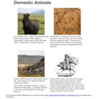 Domestic Animals.pdf